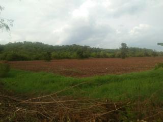 ขายที่ดิน ตำบล อรพิมพ์ อำเภอครบุรี 167 ไร่ เศษๆ ติดทางหลวง 4 ช่องทางวิ่ง โชคชัย ครบุรี
