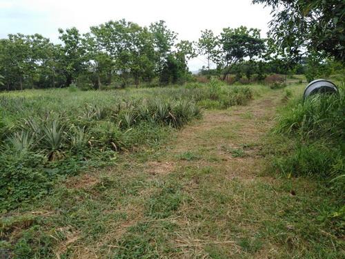 ขายที่ดินพร้อมสวนสับปะรด  18-0-65 ไร่ ต.บ้านเสด็จ อ.เมือง จ.ลำปาง