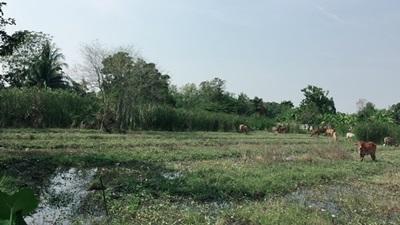 ขายด่วนที่ดินริมน้ำ เชื่อมทางเข้าออกได้สองทางด้านบรมราชชนนี ซอย 64 และ ด้านพุทธมณฑลสาย2