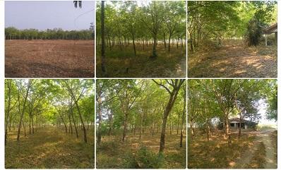 ขายที่ดินโฉนด ผ่อนได้ พร้อมบ้านชั้นเดียว ที่ดิน 29 ไร่ มีสวนยาง 15 ไร่ ไร่ละ 100,000 บาท จ.อุบลราชธานี