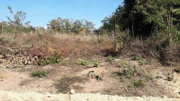 ขายที่ดิน 26 ไร่ พร้อม สวนลำไย มะม่วง มะขามหวาน 13 ที่ดินเปล่า 13 ไร่ ราคาถูกมาก