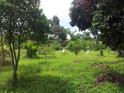 ขายที่ดินแปลงสวย ที่ดินติดคลอง ขายสวนเกษตร ที่ดินแม่แฝกใหม่ ที่ดินเชียงใหม่