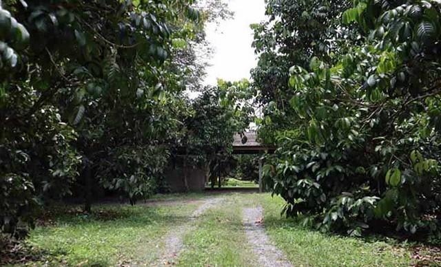 P53LF1909032 ขายที่ดิน 12-2-7 ไร่ จันทบุรี เมืองแสลง 7.9 ล้าน