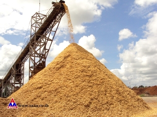 Largest producer and exporter of high excellent woodchips