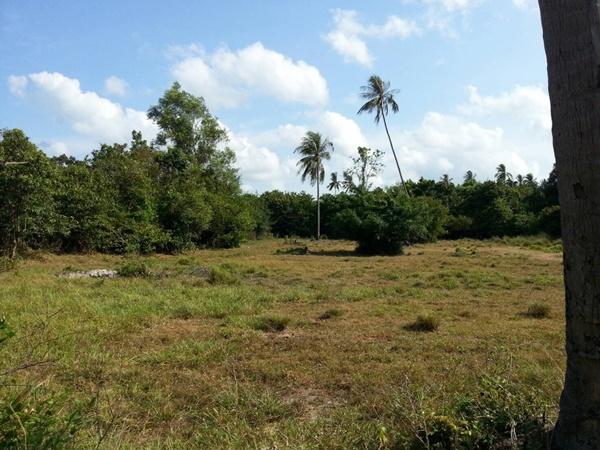 ขายที่ดิน เกาะสมุย ทำเลสวย ในตำบลลิปะน้อย  37ไร่กว่า
