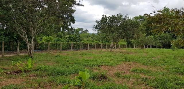 ที่สวนผสมแปลงกลางๆ ที่สวย ดินดีมาก เนื้อที่ 7-2-22 ไร่ ขายยกแปลงไม่แบ่งขาย นครนายก