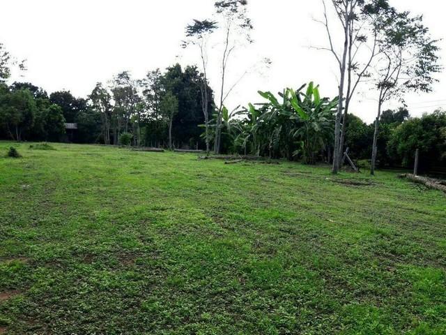 ขายที่สวนสวย ๆ 5 ไร่ ยกแปลง แปลงกลาง ๆ จ้า ต.ดงละคร อ.เมือง จ.นครนายก ฟรีโอน