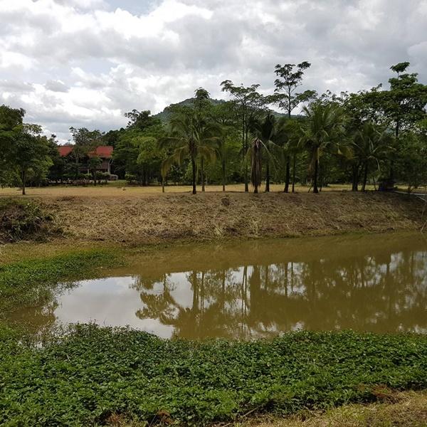 FOR SALE ที่ดินโคราช ไร่ละ 690,000 บาท พร้อมบ้านพักน้ำไฟพร้อมสวนเกษตรบ่อน้ำอีก 3 บ่อ
