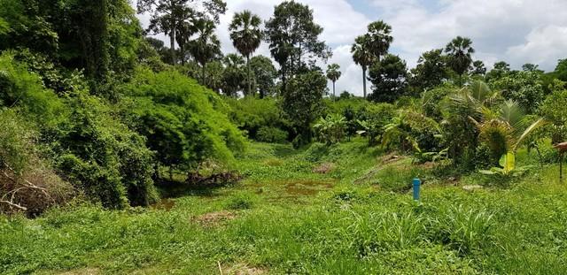 ขาย ที่สวนผสมสวย แปลงนี้โฉนดพร้อมโอน 2 โฉนดขายยกแปลงไม่แบ่งขาย หนองแก้ว ปราจีนบุรี