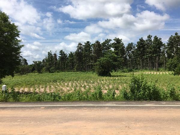 ขายที่ดินเปล่าเนื้อที่ 4 ไร่ 1 งาน 94 ตารางวา ติดถนนรอบเมือง อำเภอตระการพืชผล