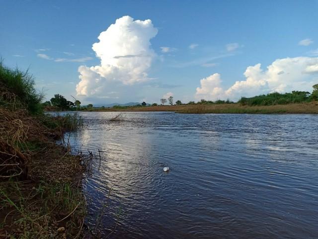 ขายที่ดินติดแม่น้ำน่าน ขนาด 1 ไร่ 5 ตร.ว มีพื้นที่ส่วนงอกรวม 3ไร่ ต.ศรีภูมิ อ.ท่าวังผา จ.น่าน